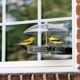 yankees winner window bird feeder offers the opportunity to observe