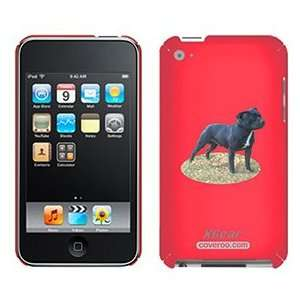 Staffordshire Bull Terrier on iPod Touch 4G XGear Shell