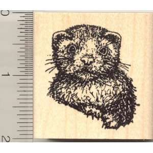 Medium Baby Ferret Rubber Stamp Arts, Crafts & Sewing
