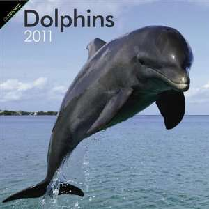 2011 Animal Calendars Dolphins   12 Month   30x30cm