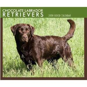 Chocolate Labrador Retrievers 2008 Desk Calendar Office